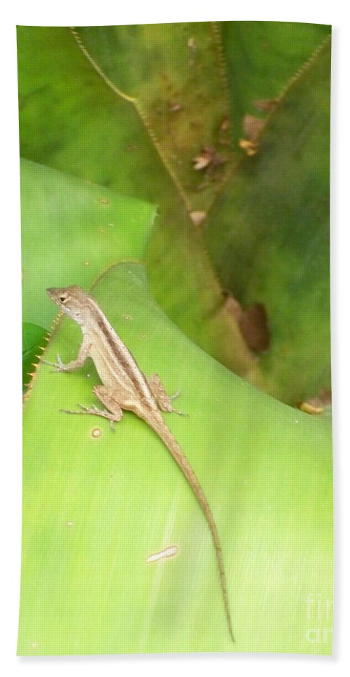 Florida Bath Sheet featuring the photograph Curious Lizard I by Chris Andruskiewicz