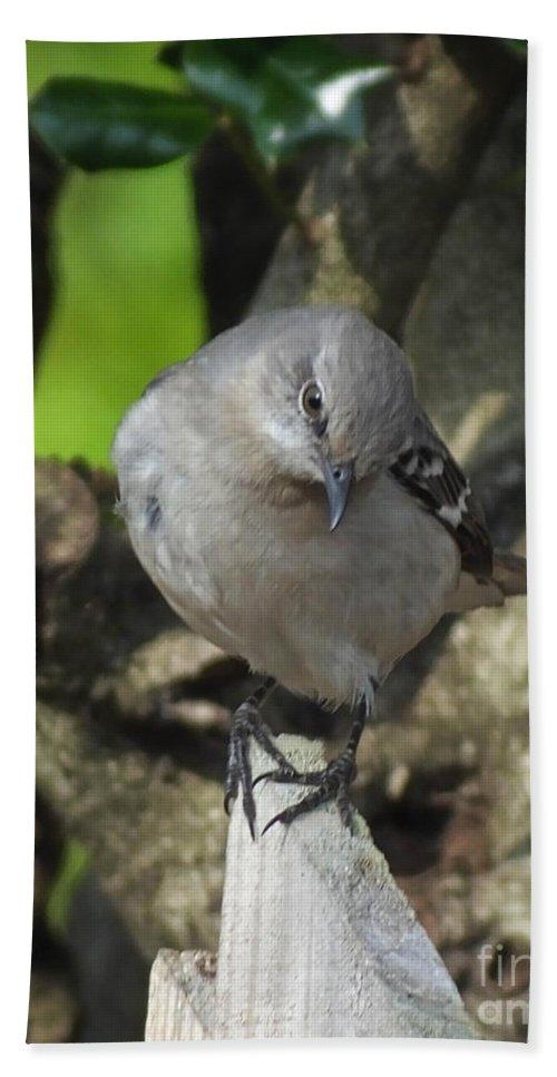 Bird Bath Sheet featuring the photograph Curious Mockingbird by Lizi Beard-Ward