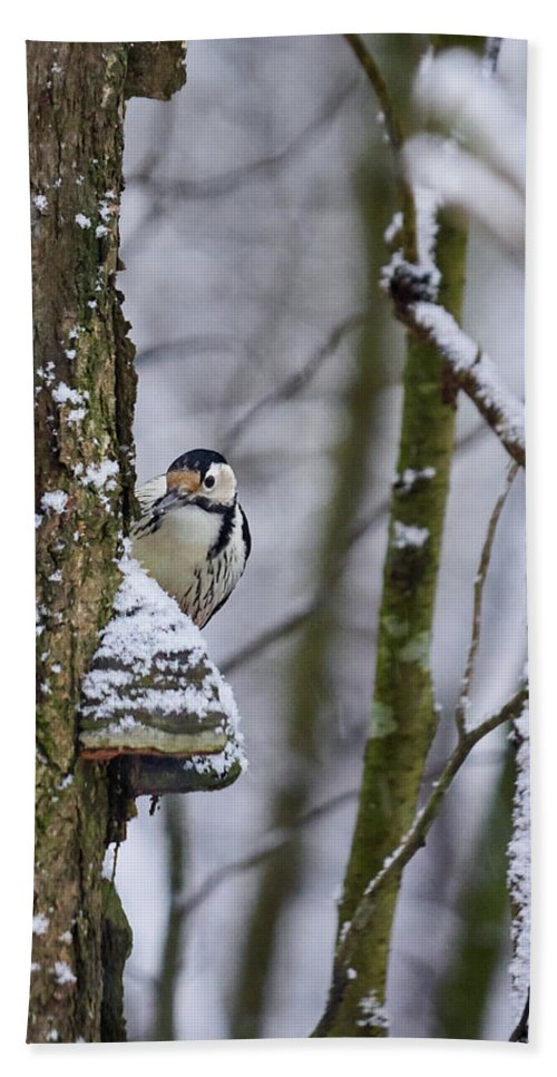 Dendrocopos Leucotos Bath Sheet featuring the photograph Curious White-backed Woodpecker by Jouko Lehto