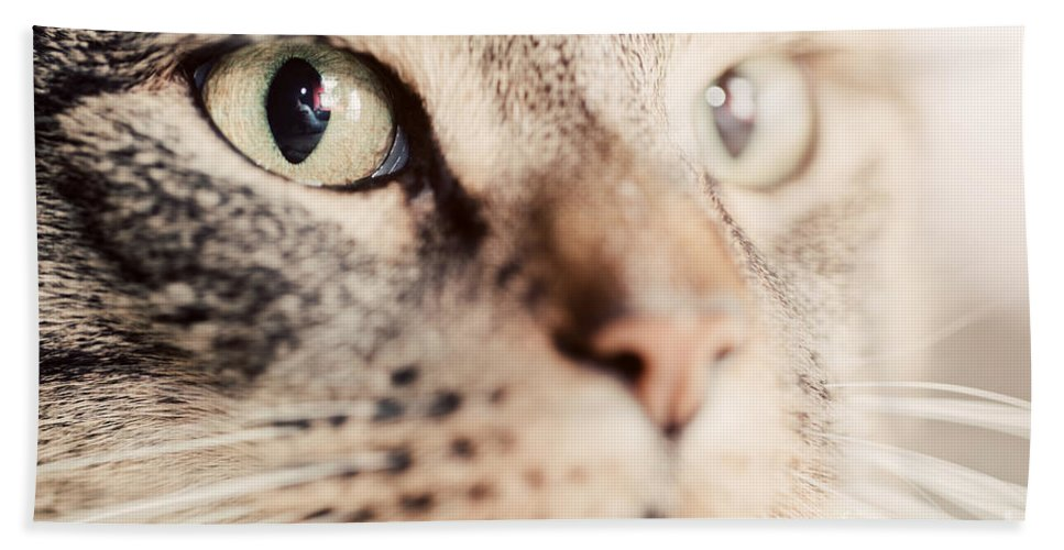 Cat Hand Towel featuring the photograph Cute Cat Close-up Portrait by Michal Bednarek