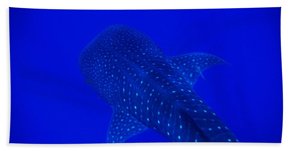 Whale Shark Hand Towel featuring the photograph Cute Little Fishy...... by Strato ThreeSIXTYFive