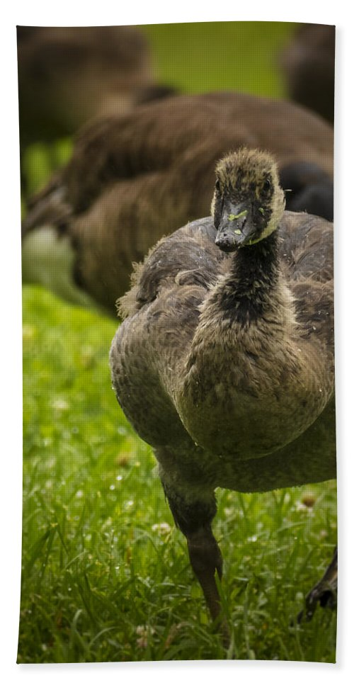 Goose Hand Towel featuring the photograph Cute On The Move by Jorge Perez - BlueBeardImagery
