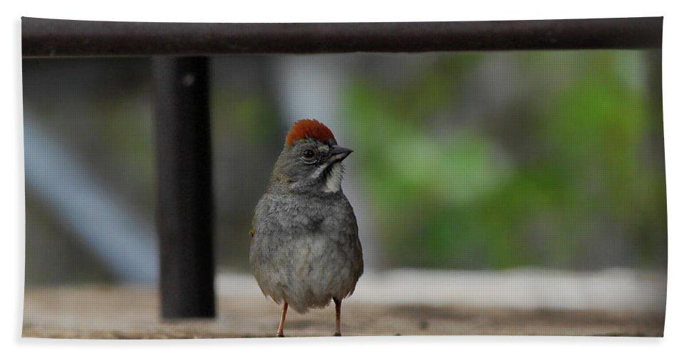 Bird Bath Sheet featuring the photograph Cute Redhead by Donna Blackhall