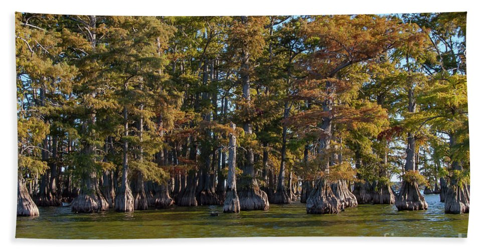 Reelfoot Lake State Park Bath Sheet featuring the photograph Cypress Grove Four by Bob Phillips