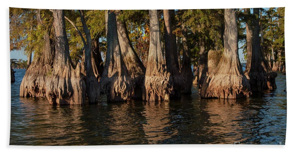 Reelfoot Lake State Park Bath Sheet featuring the photograph Cypress Grove Two by Bob Phillips