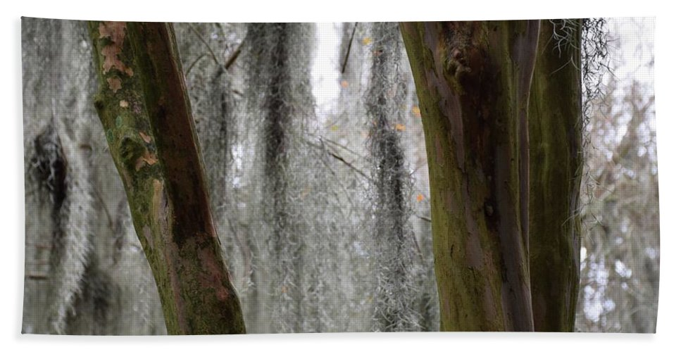 Trees Hand Towel featuring the photograph Cypress In The Bayou by Jenny Regan