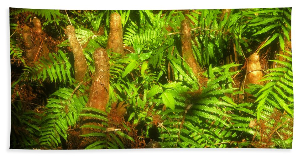 Bald Cypress Hand Towel featuring the photograph Cypress Knees In Ferns by David Lee Thompson