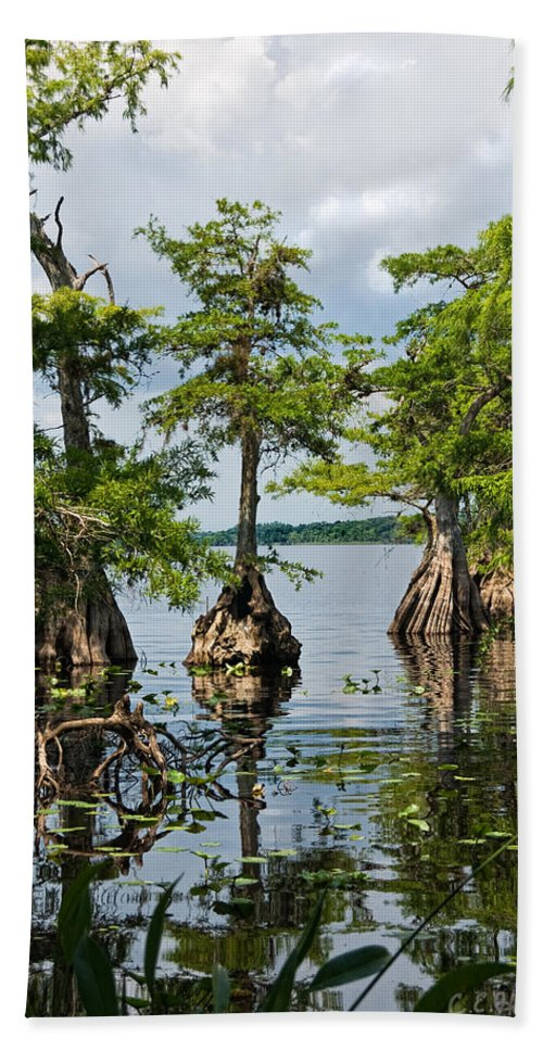 Trees Bath Towel featuring the photograph Cypress Reflections by Christopher Holmes