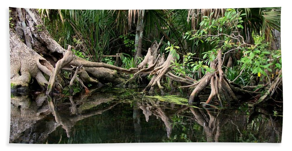 Cypress Tree Hand Towel featuring the photograph Cypress Swamp by Barbara Bowen
