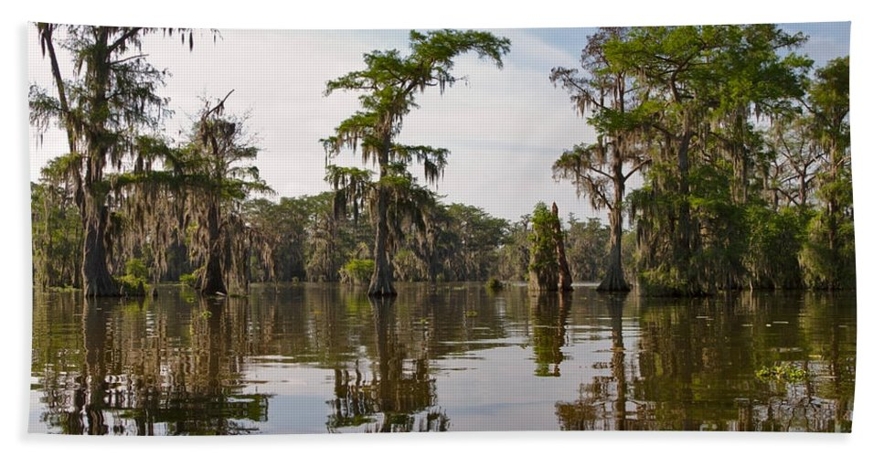 Swamp Hand Towel featuring the photograph Cypress Trees And Spanish Moss In Lake Martin by Louise Heusinkveld