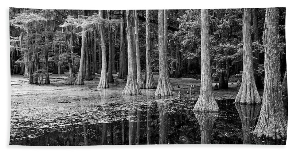 Black And White Hand Towel featuring the photograph Cypresses In Tallahassee Black And White by Carol Groenen