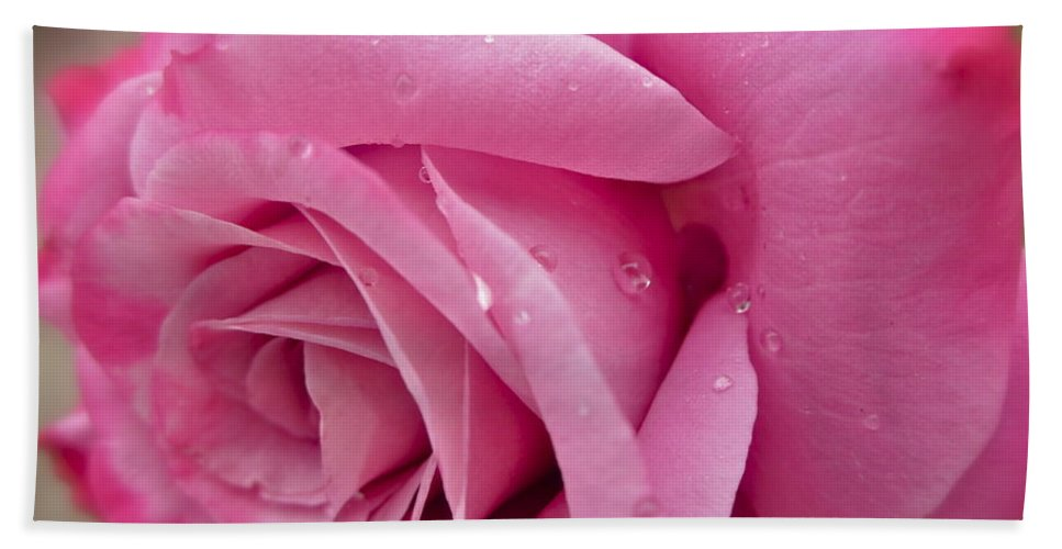 Photograph Of Pink Rose Hand Towel featuring the photograph Daddy's Rose by Gwyn Newcombe