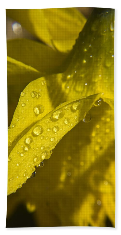 Daffodil Bath Towel featuring the photograph Daffodil Dew by Teresa Mucha