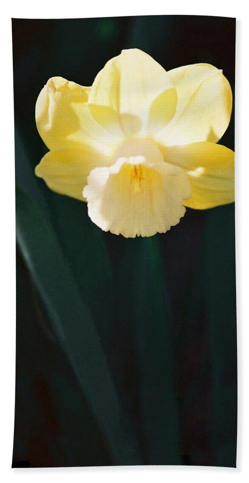 Daffodil Bath Sheet featuring the photograph Daffodil by Steve Karol