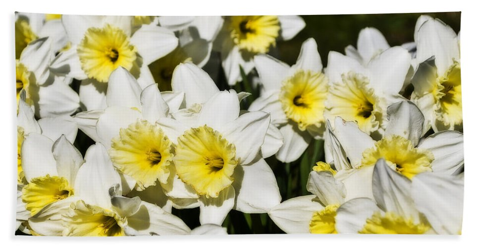 Flowers Hand Towel featuring the photograph Daffodils by Svetlana Sewell