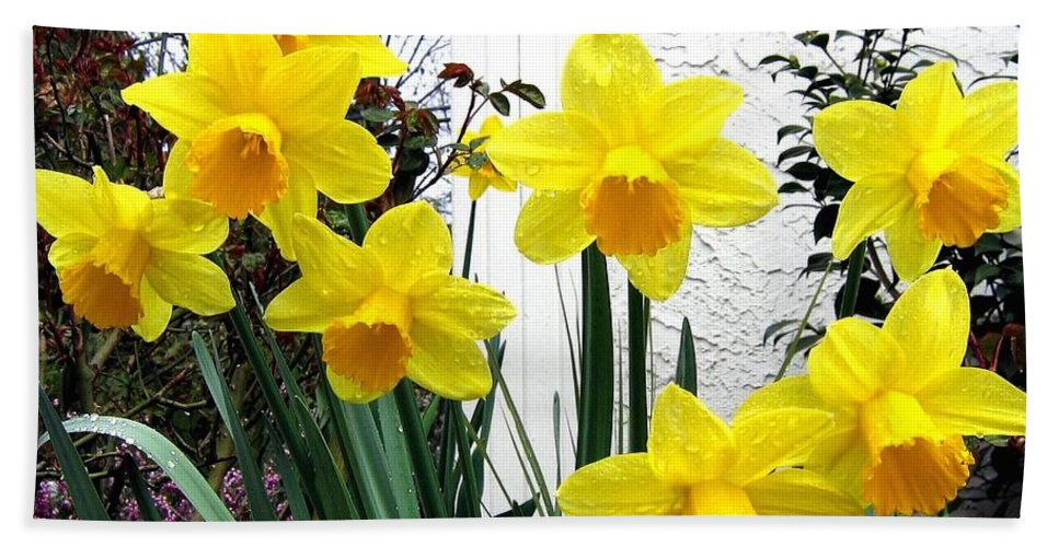 Daffodils Bath Sheet featuring the photograph Daffodils by Will Borden