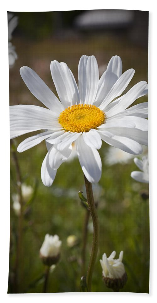 Daisy Hand Towel featuring the photograph Daisy 1 by Kelley King