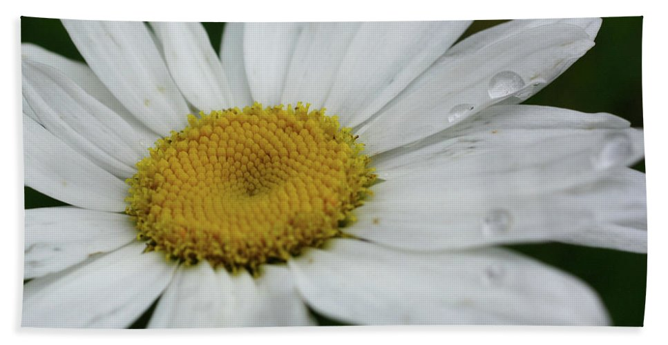 Flower Hand Towel featuring the photograph Daisy And Raindrops by Smilin Eyes Treasures