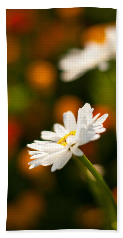 Daisy Bath Sheet featuring the photograph Daisy Bokeh by Mike Reid
