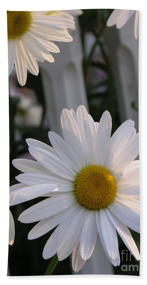 Daisy Bath Sheet featuring the photograph Daisy by Diane Greco-Lesser