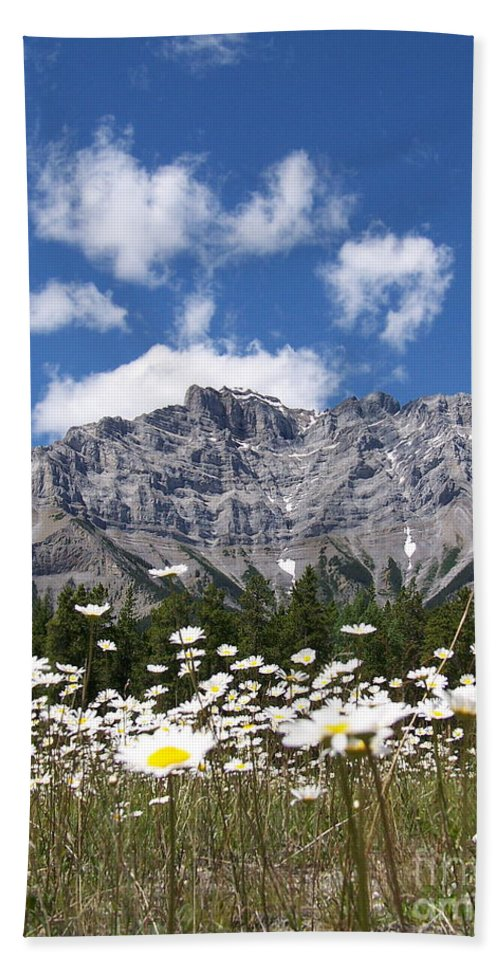 Bright Hand Towel featuring the photograph Daisy Field by Greg Hammond