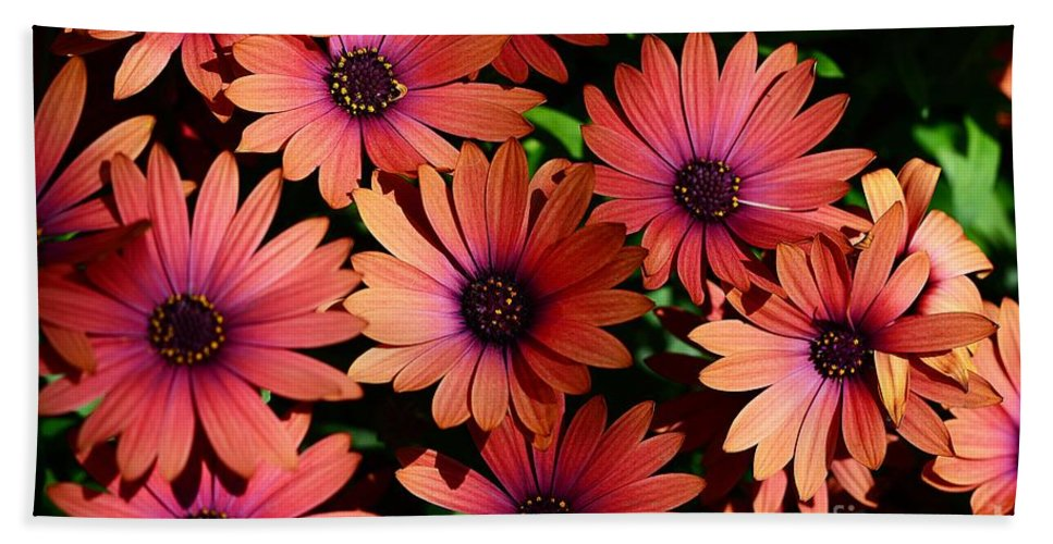 Flowers Hand Towel featuring the photograph Daisy Group Shot by Cindy Manero