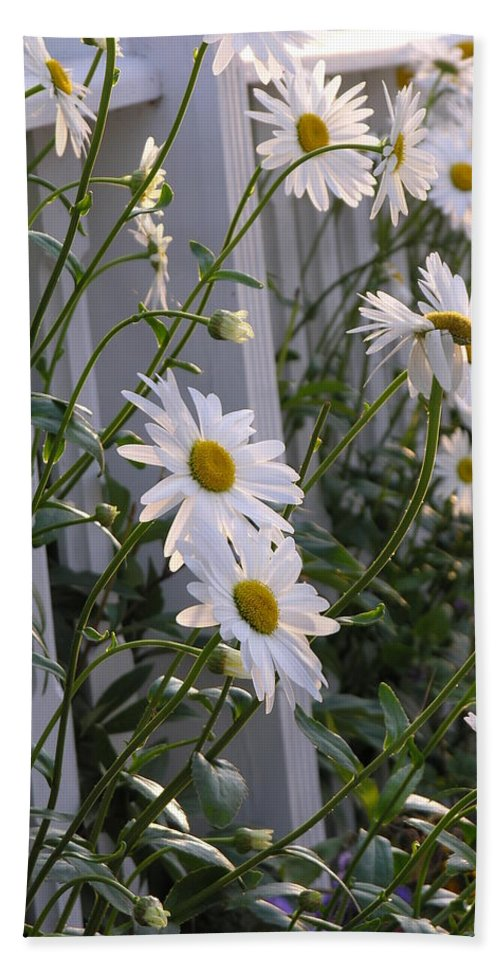 Daisy Hand Towel featuring the photograph Daisy's Escaping by Diane Greco-Lesser
