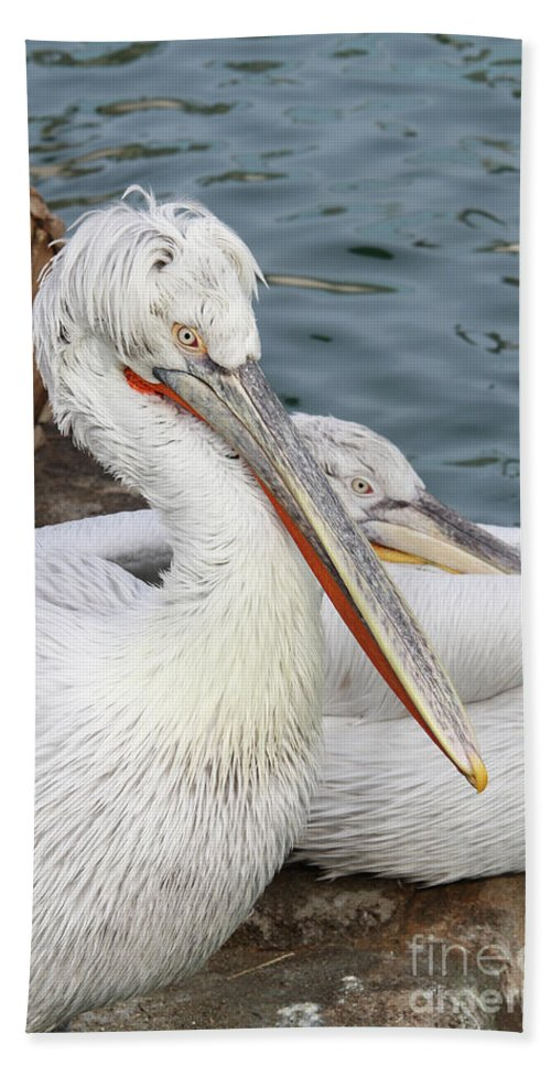 Pelican Bath Sheet featuring the photograph Dalmatian Pelican #3 by Judy Whitton