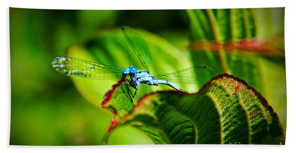 Damselfly Bath Sheet featuring the photograph Damselfly by Mariola Bitner