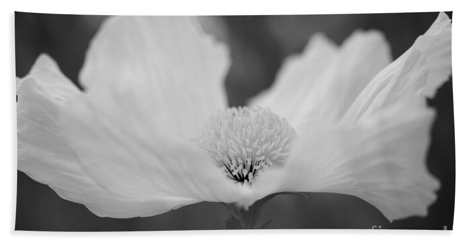 Matilija Poppy Bath Sheet featuring the photograph Dancing Matilija In Black by Brooke Roby