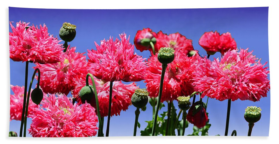 Dancing Bath Sheet featuring the photograph Dancing Poppies by Terry Anderson