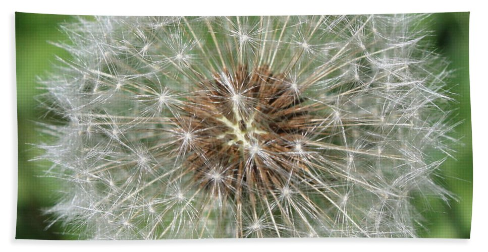 Dandelion Hand Towel featuring the photograph Dandelion Macro by Carol Groenen
