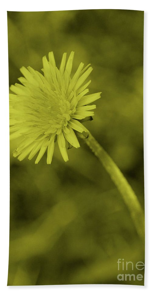 Tint Hand Towel featuring the photograph Dandelion Tint by Eddie Barron