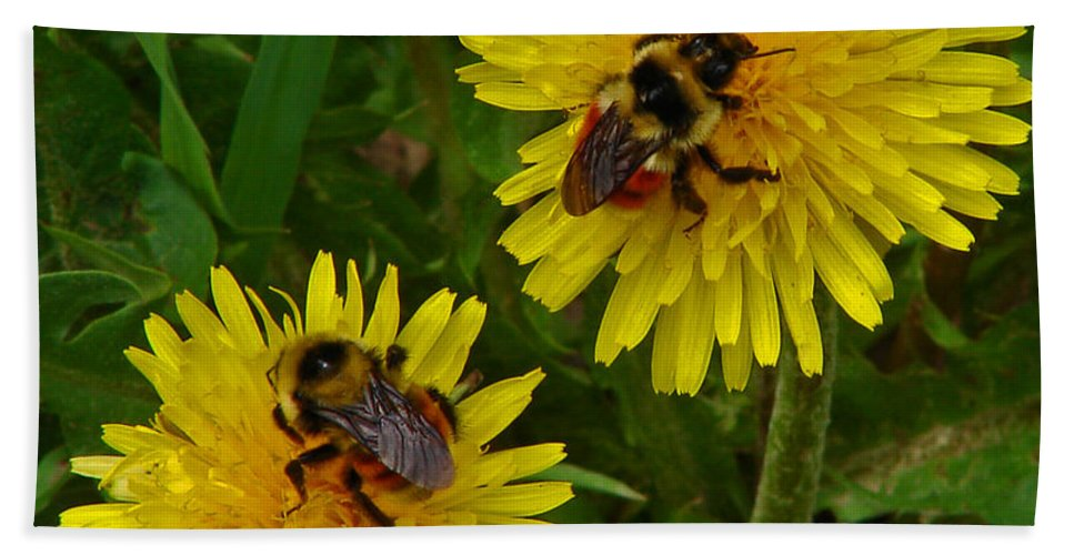 Dandelion Bath Sheet featuring the photograph Dandelions And Bees by Heather Coen