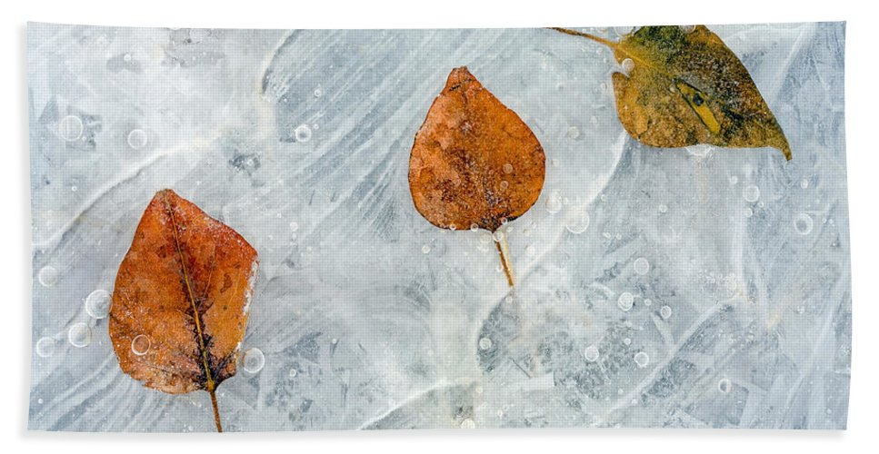 Leaves Hand Towel featuring the photograph Dare To Be Different by Mike Dawson