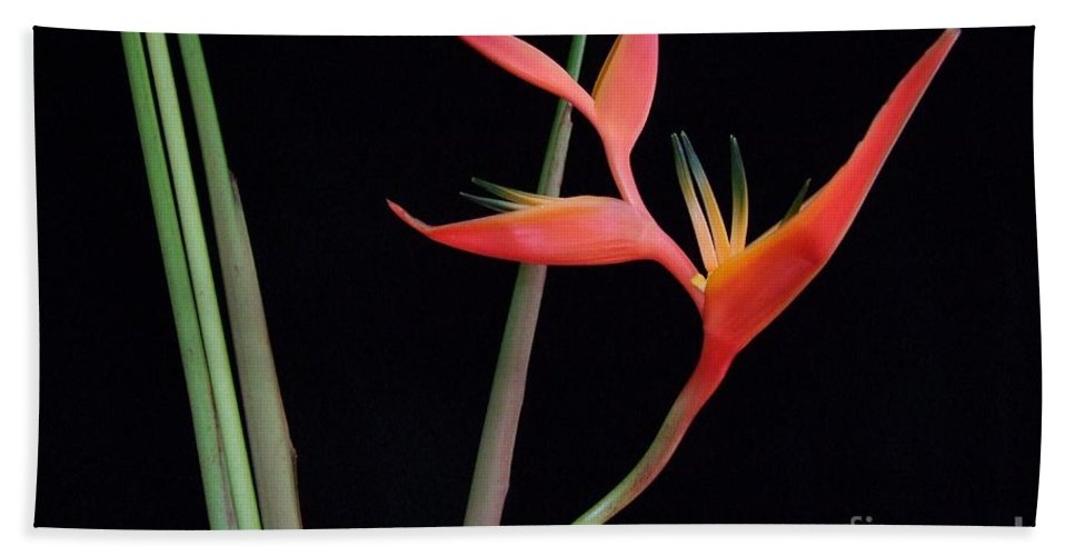 Heliconia Bath Sheet featuring the photograph Daring Heliconia Acuminata by Mary Deal