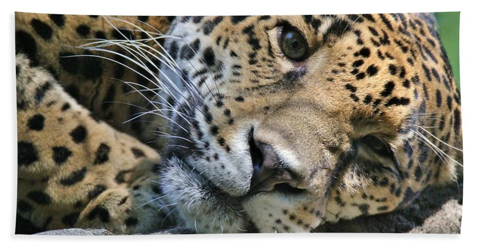 Jaguar Hand Towel featuring the photograph Day Dreaming by Christopher Miles Carter