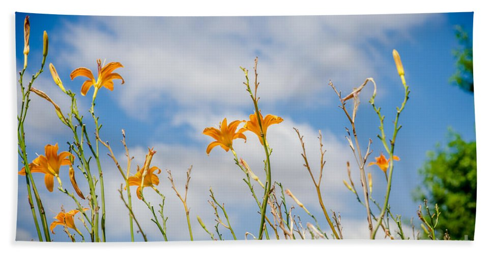 Day Hand Towel featuring the photograph Day Lilies Look To The Sky by Debra Martz