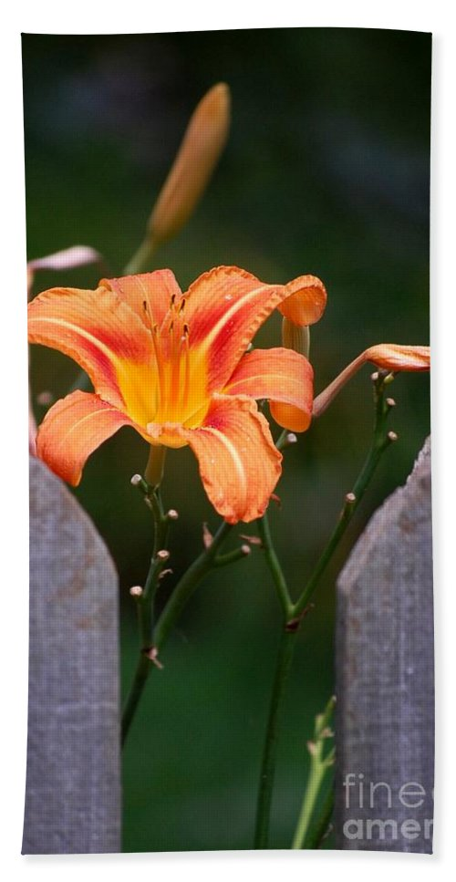 Digital Photograph Hand Towel featuring the photograph Day Lilly Fenced In by David Lane