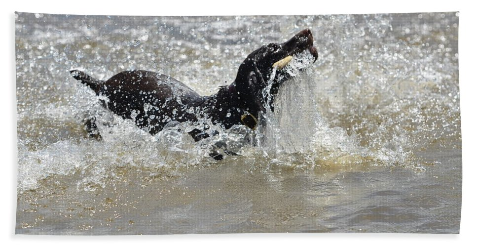 German Shorthaired Pointer Hand Towel featuring the photograph Day On The River by Tammy Mutka