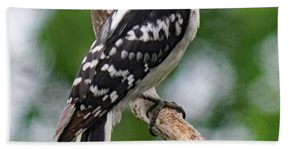 Downy Woodpecker Bath Sheet featuring the photograph Daydreaming Downy Woodpecker by Cindy Treger