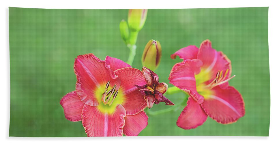 Flowers Hand Towel featuring the photograph Daylilies by Sue Collura