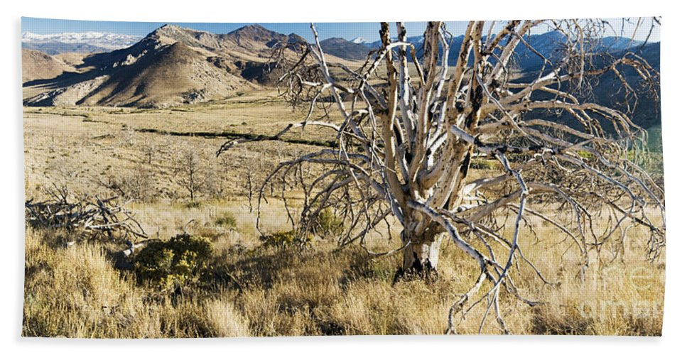 Western Scenes Bath Sheet featuring the photograph Dead Tree Panorama by Norman Andrus
