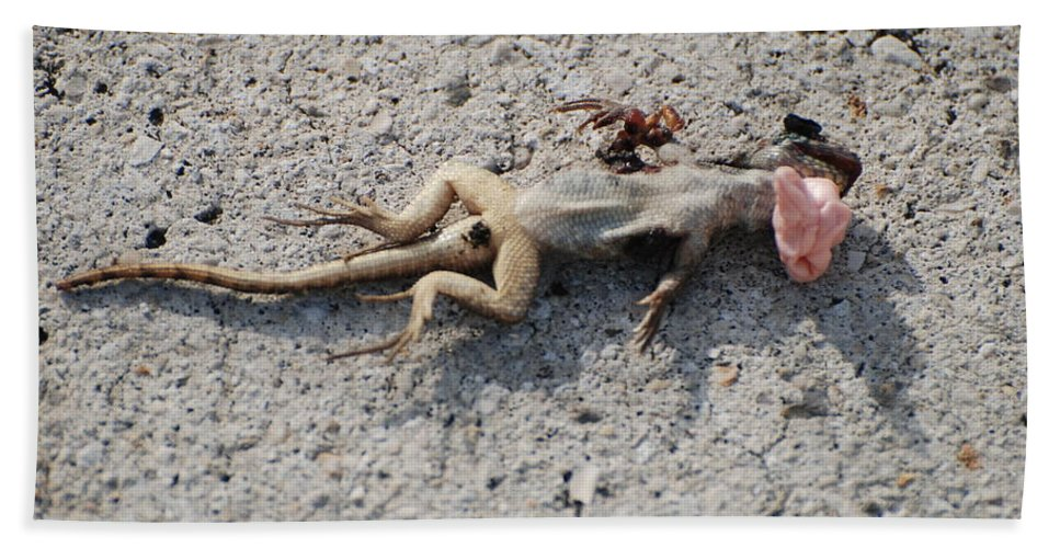 Lizards Bath Towel featuring the photograph Death By Gum by Rob Hans