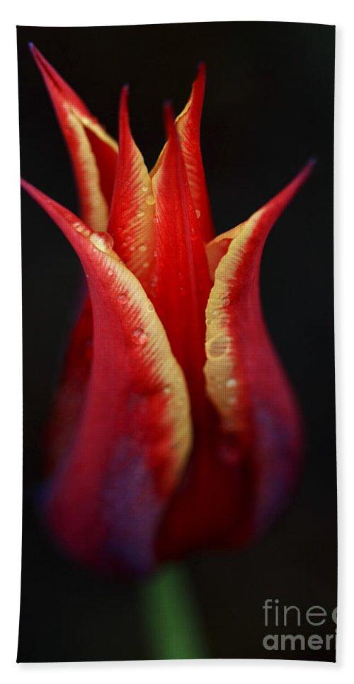 Tulip Hand Towel featuring the photograph Decorative Tulip by Deborah Benoit