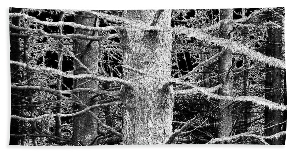 Woods Bath Sheet featuring the photograph Deep In The Woods by Will Borden