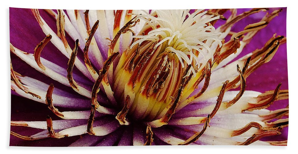 Clematis Bath Sheet featuring the photograph Deep Purple Clematis by Michael Peychich