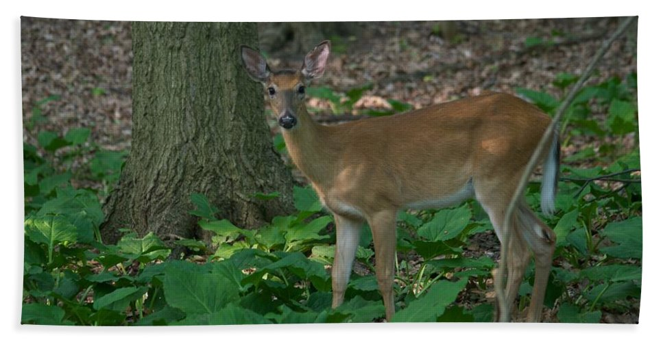 Animal Bath Towel featuring the photograph Deer 7414 by Michael Peychich