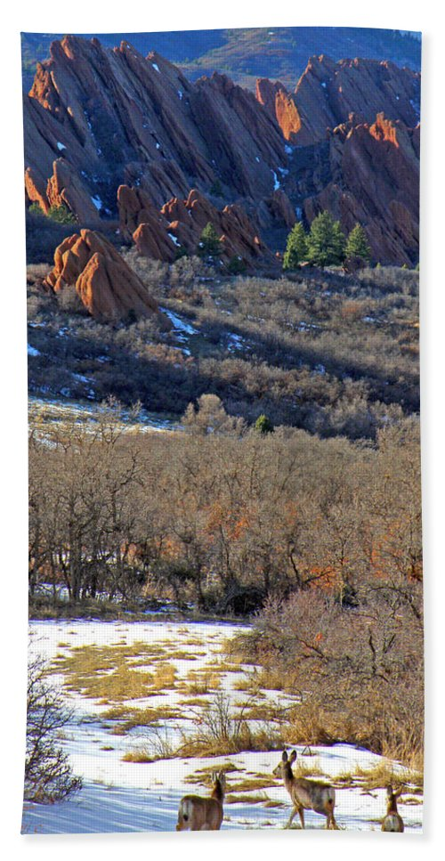 Deer Animals Wildlife Nature Roxborough State Park Colorado Winter Evening Light Rocky Mountains Bath Sheet featuring the photograph Deer At Roxborough by George Tuffy