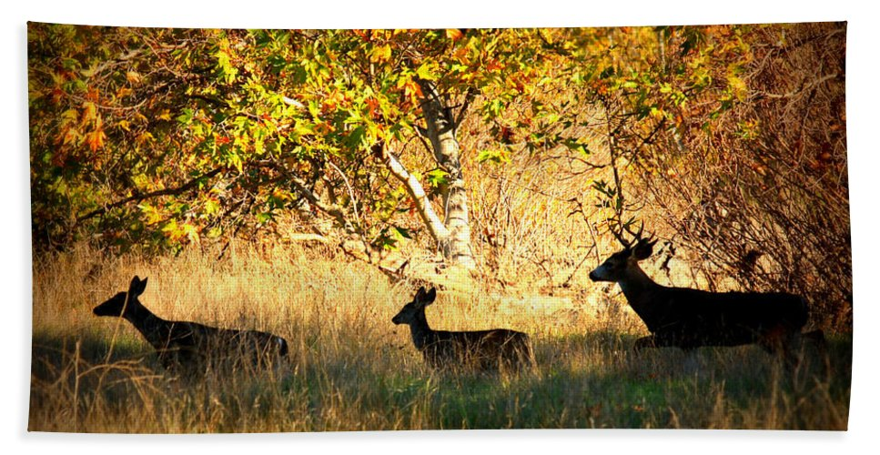 Landscape Hand Towel featuring the photograph Deer Family In Sycamore Park by Carol Groenen